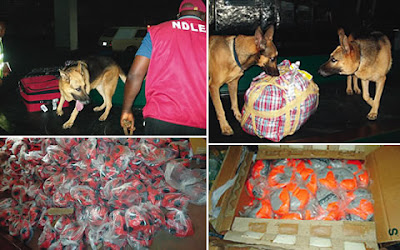 NDLEA-sniffer-dogs-detect-N351m-heroin-in-footballs-rugs
